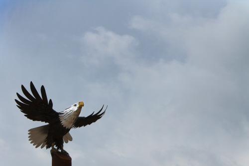 """Eagle in Flight,"" by Brent, 16"